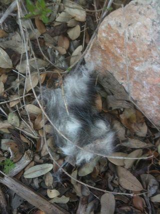 Dead Possum Take 2